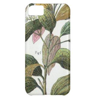 Cinnamon Girl iPhone 5C Cases