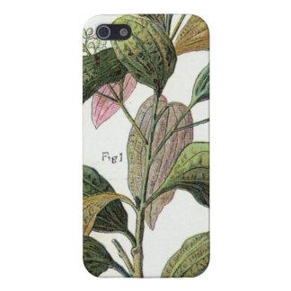 Cinnamon Girl Case For iPhone 5