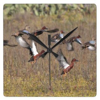 Cinnamon Teal Duck Bird Wildlife Animal Clock