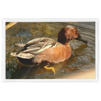 Cinnamon Teal Duck Bird Wildlife Animal Tray Rectangle Serving Trays