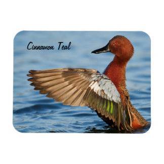 Cinnamon Teal Duck Magnet