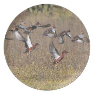 Cinnamon Teal Ducks Plate