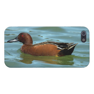 Cinnamon Teal Cases For iPhone 5