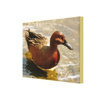 Cinnamon Teal Stretched Print Canvas Print