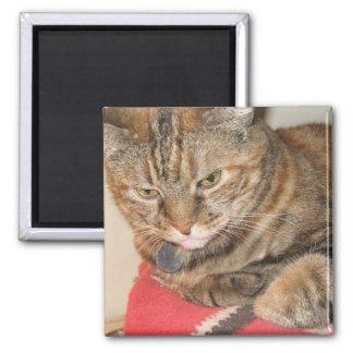 Cinnamon the Cat 2 Inch Square Magnet