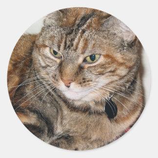 Cinnamon the Cat Classic Round Sticker