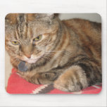 Cinnamon the cat mouse pad