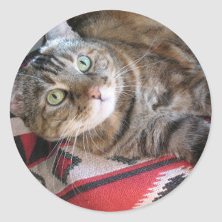 cinnamon the cat on red classic round sticker