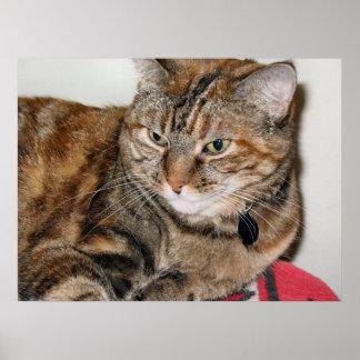 Cinnamon the Cat Print