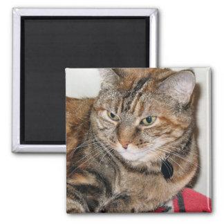 Cinnamon the Cat Refrigerator Magnet