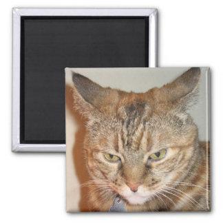 Cinnamon the Cat Refrigerator Magnets