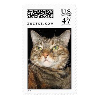 Cinnamon the Cat Stamp