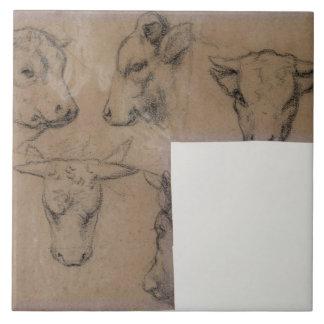 Cinq Croquis de tete de vache (pencil on paper) Tile