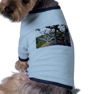 Cipreses de Monterey - pinta Coto del estado de L Camiseta De Mascota