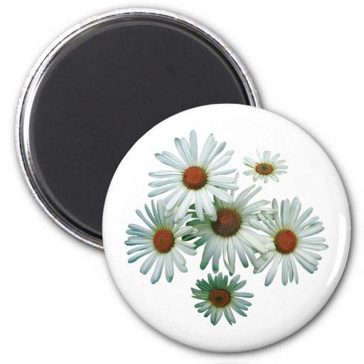 Circle of Daisies Refrigerator Magnet