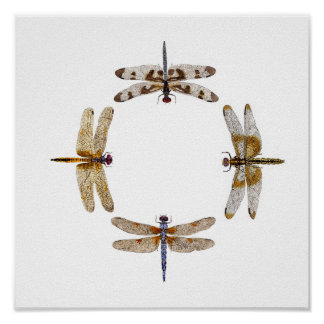Circle Of Dragonflies Poster II