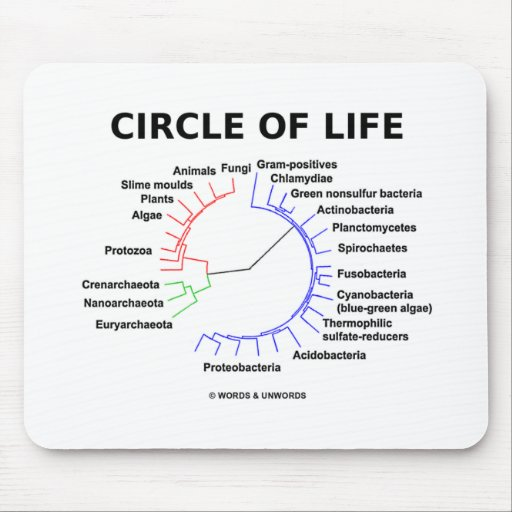 Circle Of Life (Circular Phylogenetic Tree) Mouse Pad