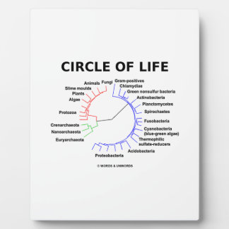 Circle Of Life (Circular Phylogenetic Tree) Display Plaques