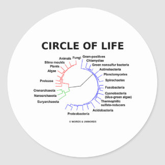 Circle Of Life (Circular Phylogenetic Tree) Classic Round Sticker