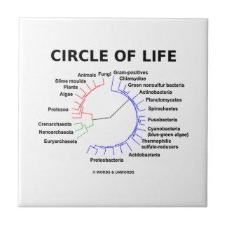 Circle Of Life (Circular Phylogenetic Tree) Tile