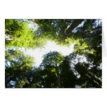Circle of Redwood Trees at Redwood National Park Card