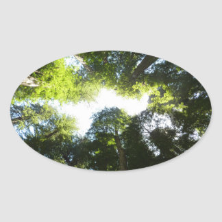 Circle of Redwood Trees at Redwood National Park Oval Sticker