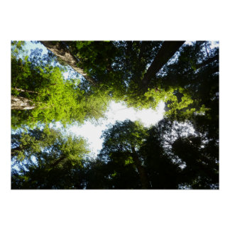 Circle of Redwood Trees in Redwood National Park Poster
