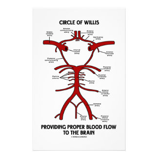 Circle Of Willis Providing Proper Blood Flow Brain Stationery