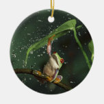 Circle Ornament,  Red Eyed Frog