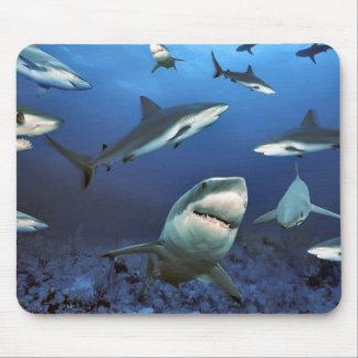 Circling sharks mouse pad
