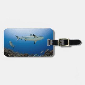 Circling Sharks of the Caribbean Luggage Tag