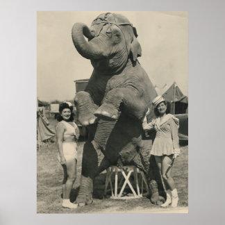 circo del elefante y de 2 chicas poster