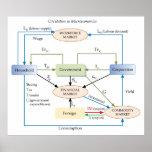 Circulation Diagram in Macroeconomics Poster