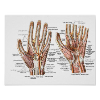 Circulation of the Hands Poster