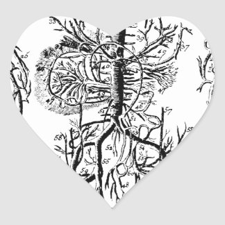 Circulatory System antique Heart Sticker