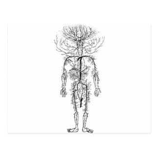 Circulatory System antique Postcard