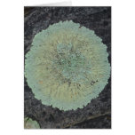 Círculo cubierto de musgo del liquen tarjeta