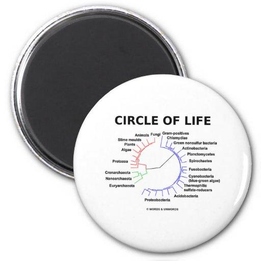 Círculo de la vida (árbol filogenético circular) iman