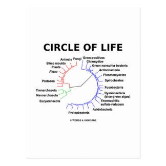 Círculo de la vida (árbol filogenético circular) tarjetas postales