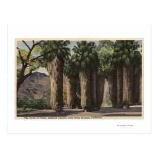 Círculo de palmas, barranco de Andreas Postales