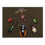 Círculo del escarabajo de la fantasía postal