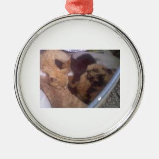 Círculo del oranment del catnap de DNatureofDTrain Ornamento De Navidad