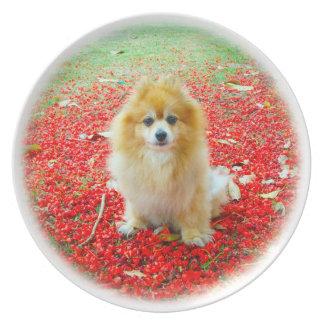 Círculo rojo de las flores de la placa el | Pomera Plato De Comida