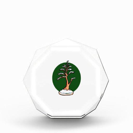 círculo vertical del verde de los bonsais del invi