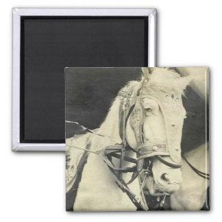 circus horse 2 inch square magnet