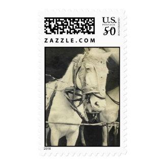 circus horse postage