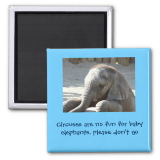 Circuses are no fun for baby elephants 2 inch square magnet
