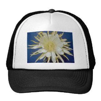 cirio de floración de noche blanca (undatus) del gorro de camionero