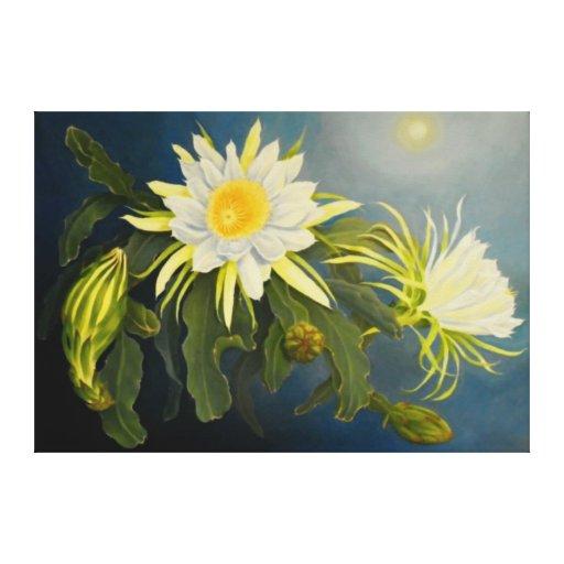 Cirio de floración de noche lona estirada galerias
