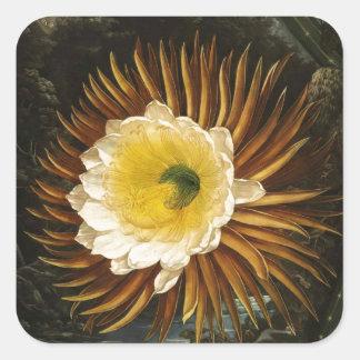 Cirio Noche-Floreciente Thornton de la flor del Pegatina Cuadrada